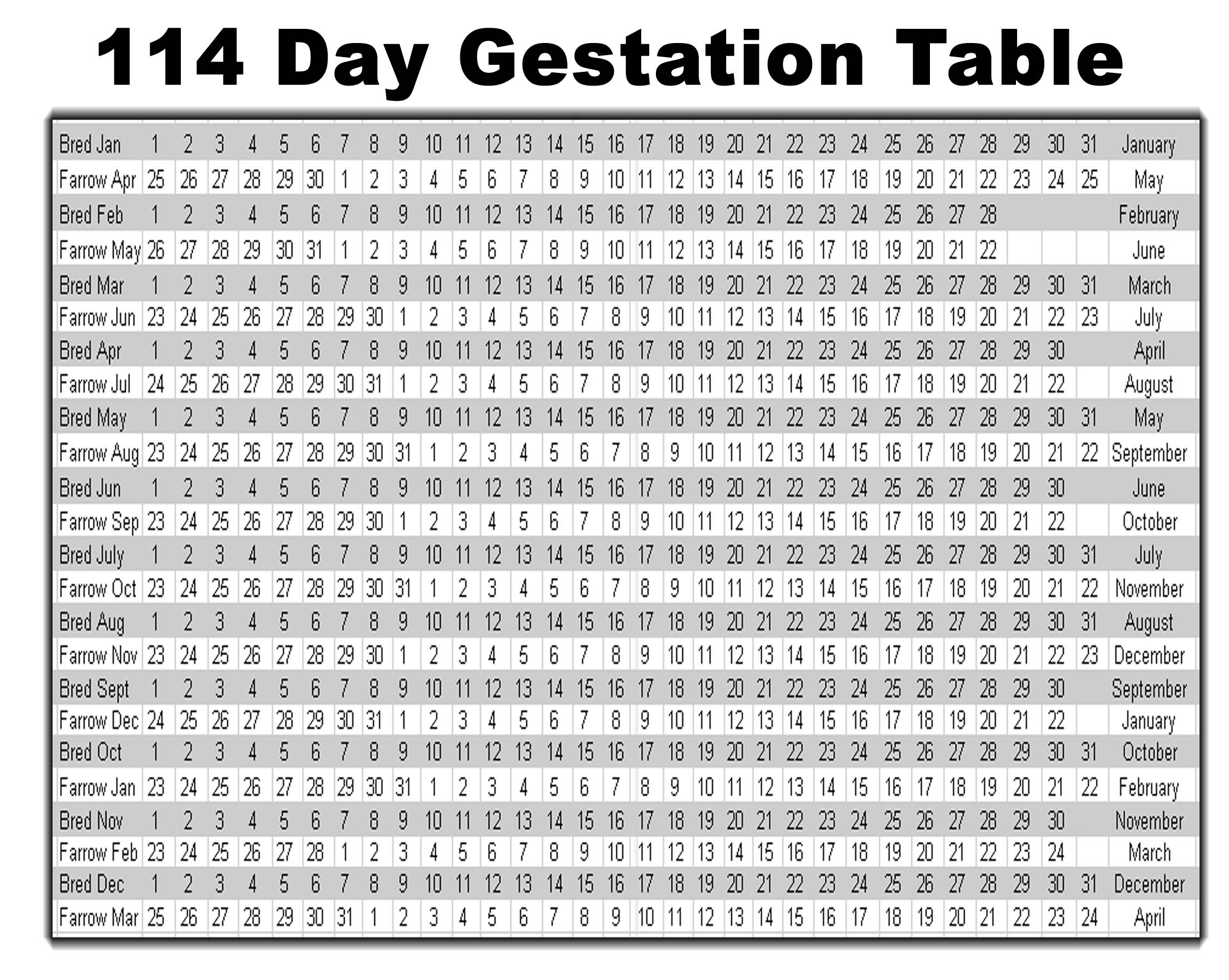 swine pig gestation table
